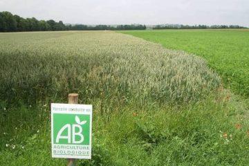 L'agriculture biologique doit se développer pour atteindre des objectifs verts