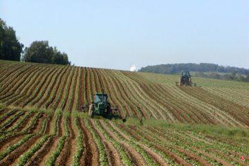 Les agriculteurs de l'UE pourraient obtenir des aides pour réduire les émissions de méthane du bétail