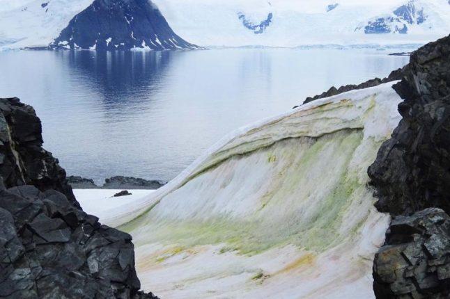En Antarctique, le changement climatique transforme le paysage passant du blanc au vert