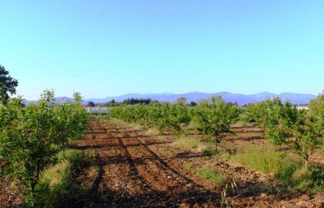 L'agriculture régénérative a le vent en poupe
