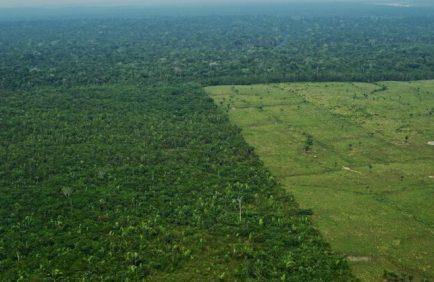 La BNP cessera de financer les entreprises exploitant des terres déboisées en Amazonie