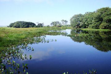 Coca-Cola, la dernière marque mondiale à « adopter un parc » dans la forêt tropicale du Brésil