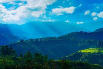 Colombie : le drame silencieux de la déforestation intensive