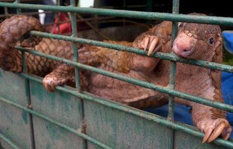 En Chine les poursuites pour crimes contre la faune en forte hausse après l'épidémie de COVID-19