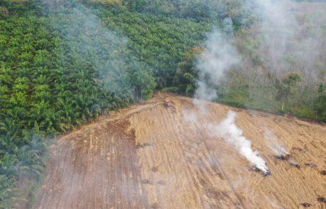 Axa Investment Managers étend ses exclusions de financement à la déforestation