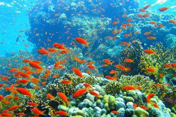 Unesco : la Grande Barrière de Corail devrait être classée en danger