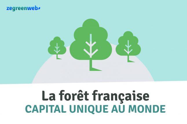 [Infographie] La forêt française, un capital unique au monde