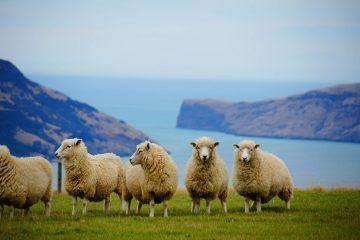 La Nouvelle-Zélande se fixe l'objectif d'atteindre la neutralité carbone d'ici 2050