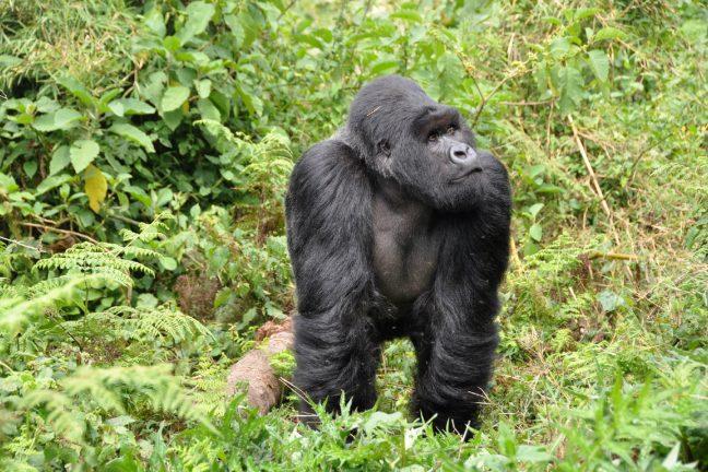 Le Rwanda mise désormais sur le tourisme haut de gamme