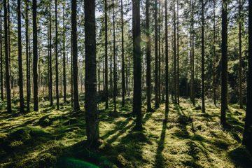 """Le Danemark a organisé le premier """"Téléthon des arbres"""""""