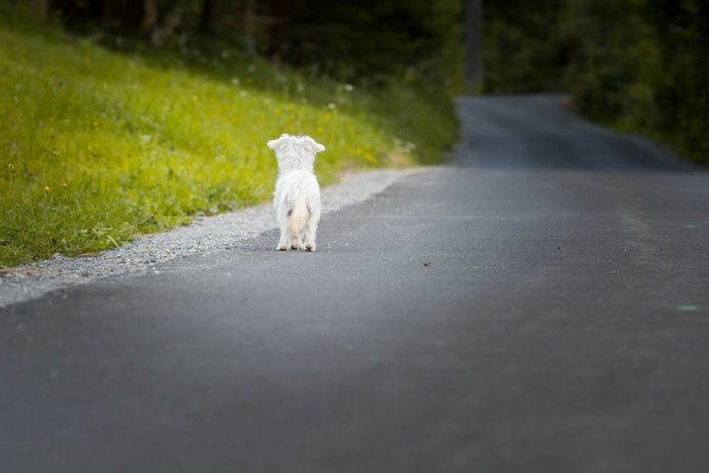 Vers un projet de loi pour mettre un terme à l'abandon des animaux de compagnie ?