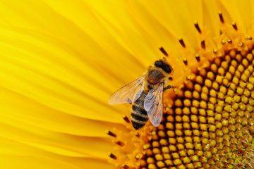 Les apiculteurs français tirent la sonnette d'alarme