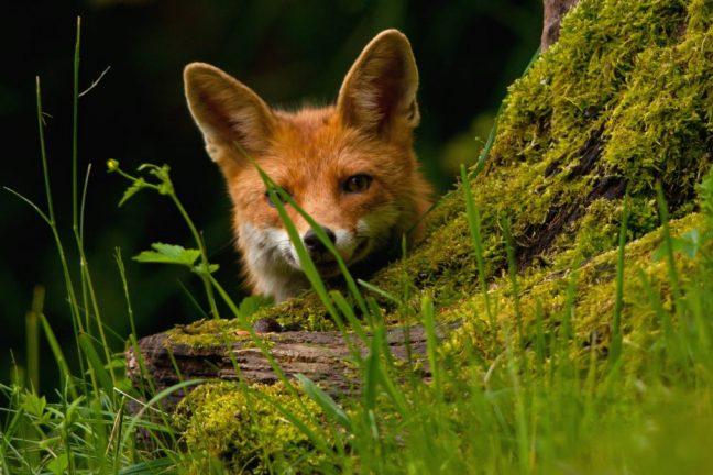 Les députés européens demandent des objectifs contraignants pour protéger la biodiversité