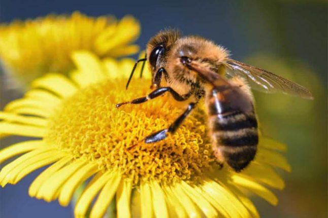 Et si votre smartphone vous aidait à sauver les abeilles?
