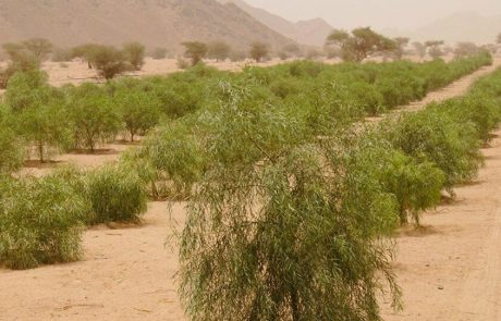 L'Arabie saoudite voit vert grâce à une importante campagne de plantation d'arbres