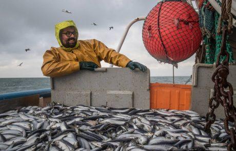 Atlantique Nord-Est : la surpêche menace le hareng, le maquereau et le merlan bleu