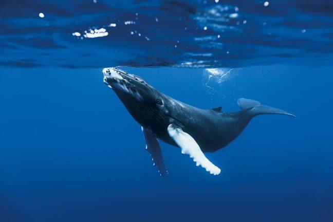 La pollution sonore nuit à la vie marine et doit être traitée comme une priorité