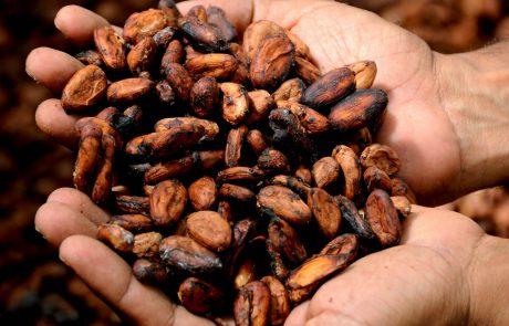 L'industrie chocolatière continue de favoriser la déforestation