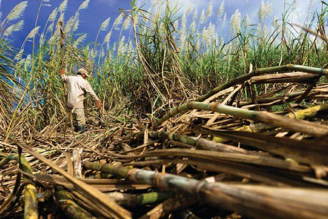 La bagasse, ressource énergétique incontournable de l'île Maurice