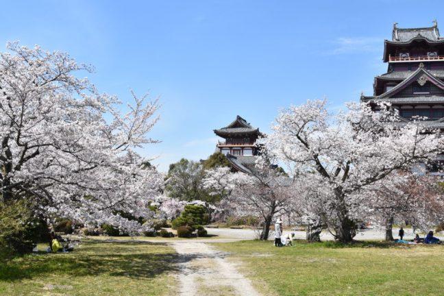 Les fleurs de cerisiers de Kyoto les plus précoces en 1200 ans indiquent un changement climatique, selon un scientifique