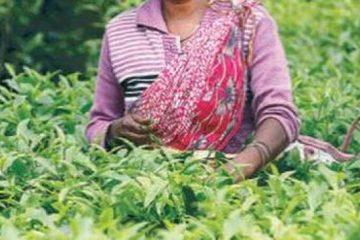 Oxfam alerte sur les conditions de travail des travailleurs des plantations de thé et de fruits
