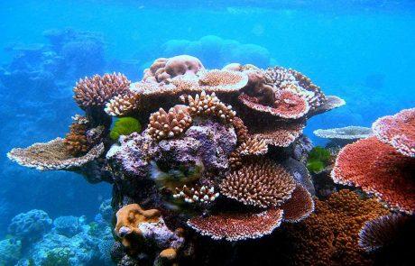 Des plongeurs immergent du corail artificiel au large des Émirats arabes unis pour construire un récif