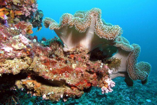 Des coraux de la Grande barrière résistent au blanchissement