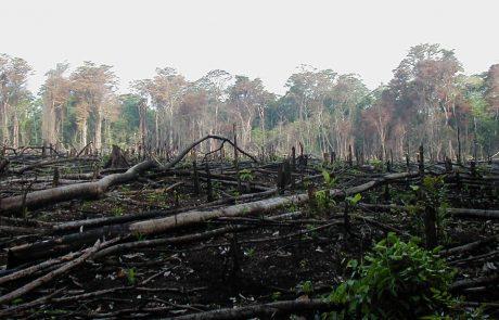 Axa va investir 1,5 milliard d'euros pour lutter contre la déforestation