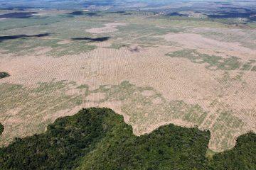 Amazonie : Forte augmentation de la déforestation pendant la crise de Covid-19