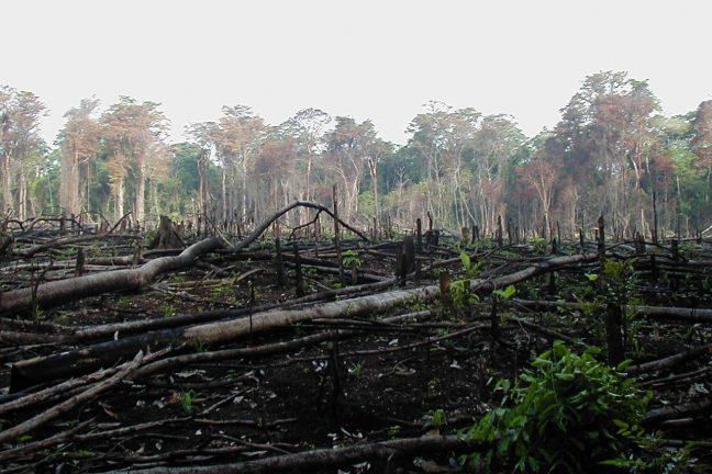 La forêt amazonienne « proche d'un point de rupture irréversible »