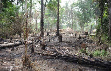 Les deux tiers de la forêt tropicale humide détruites ou dégradées dans le monde