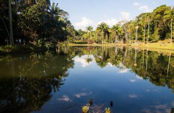 La déforestation de la forêt amazonienne s'intensifie au Brésil