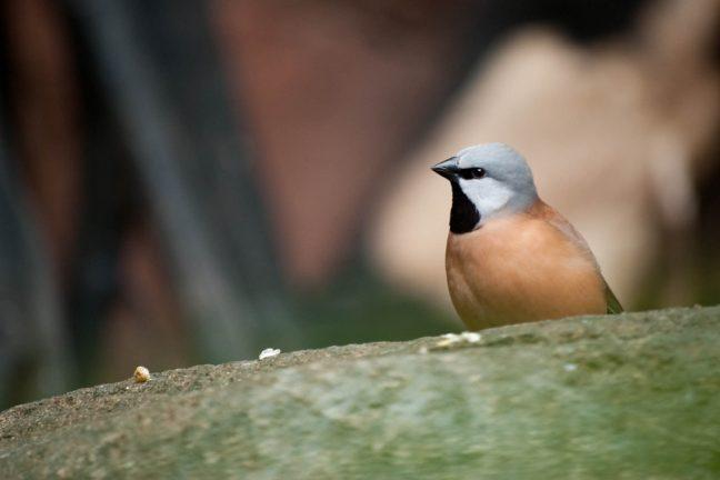 Un oiseau bloque un projet minier en Australie