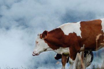 Réduire les émissions de méthane est le moyen le plus rapide de ralentir le réchauffement climatique