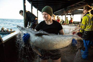 L'utilisation illégale des filets dérivants est répandue dans l'océan Indien