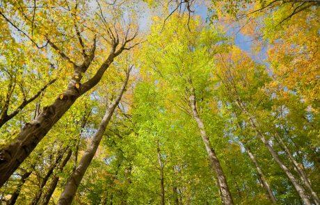 « Si la forêt n'est pas gérée, les bois finissent par mourir, se décomposent et le carbone retourne dans l'atmosphère »