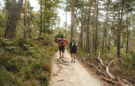 Les forestiers, protecteurs de la forêt… et des promeneurs