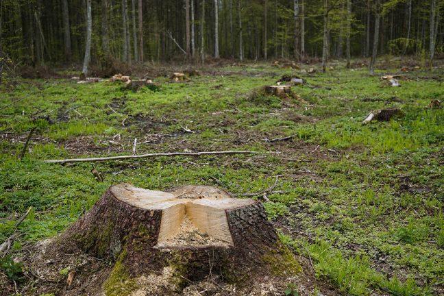 Pologne : la forêt de Bialowieza est-elle en danger ?