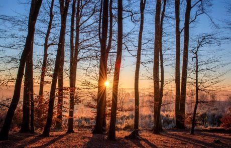 Les forêts européennes impuissantes face au réchauffement climatique