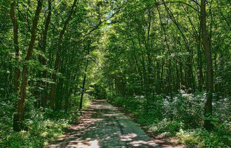 Le 11ème parc national français va voir le jour dans les forêts de Champagne et Bourgogne