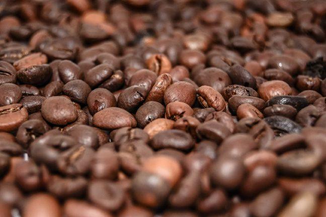 Éthiopie : le réchauffement climatique menace la culture du café