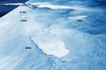 Des robots planeurs sondent l'impact de l'énorme iceberg sur l'écosystème de l'île aux pingouins