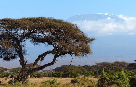 Kenya : des braconniers abattent la seule girafe blanche femelle connue