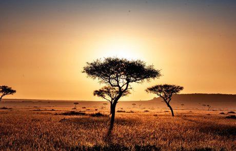 Kenya : la découverte d'un fossile d'hypercarnivore enthousiasme la communauté scientifique
