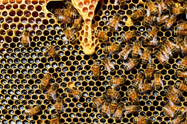 La souffrance des abeilles face aux températures extrêmes de l'été 2019