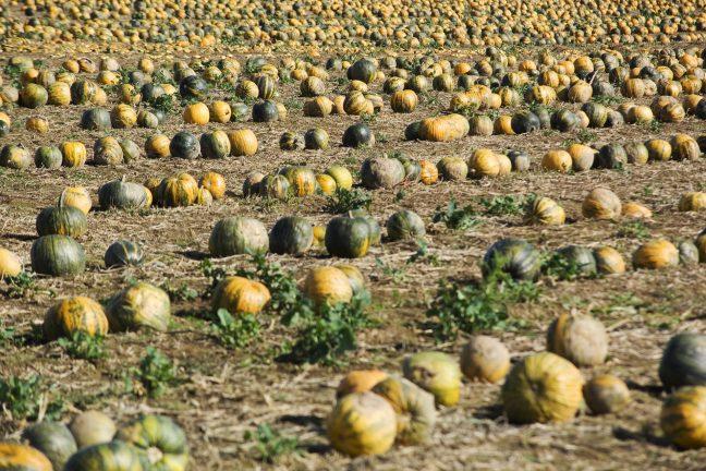 L'agriculture biologique a le vent en poupe dans l'Europe des 28