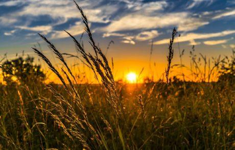 Un plan Marshall de l'agriculture pour sortir des pesticides ?