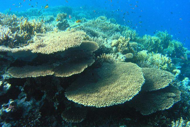 """Une étude annonce une """"hécatombe de coraux"""" dans la Grande Barrière"""