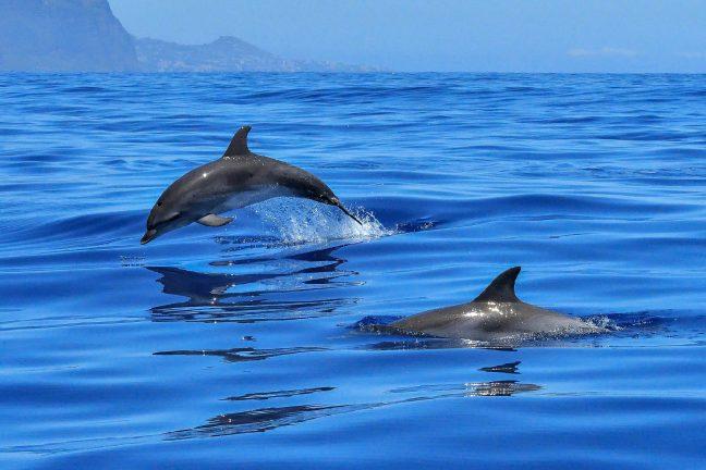 Les États-Unis face à une hécatombe de dauphins et de phoques