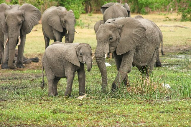 Sri Lanka : sept éléphants retrouvés morts près d'un village